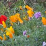 Gîte rural, relais équestre Le Tulipier - Pradelles Cabardès